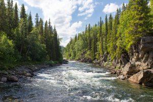 River flowing between trees