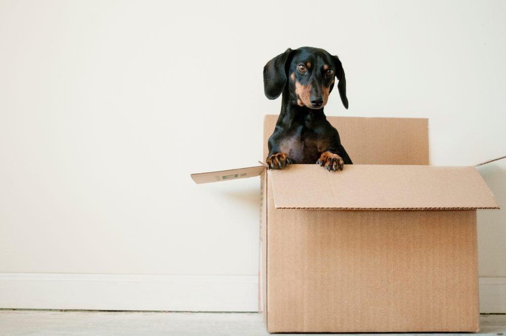 small dog sitting in a cardboard box
