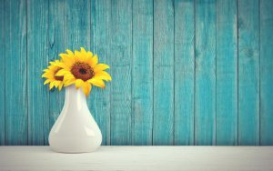 a blue wooden wall and a sunflower - give your home a new look