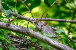 a mouse on a tree
